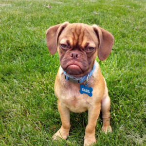 PIC FROM CATERS NEWS - (PICTURED: Grumpy Earl the dog.) Think youre having a bad day? Check out these hilarious new pictures of Earl - the very, very grumpy puppy. The peeved pup went viral when a picture of him sporting his best sullen expression was posted on Reddit and quickly gained more than two million views. The internet fell in love with five-month-old Earl and got busy creating memes and making comparisons to celebrities such as Samuel L Jackson. One user, grundo1561, remarked that This dog looks like he pays taxes. while another, PM_ME_YOUR_PM_PHOTOS, jokingly wrote Say fetch one more time. Now, owner Derek Bloomfield, 25, has decided to share some new pictures of his downcast dog to prove that Earl is definitely Grumpy Cats new rival. Derek, from Iowa, USA, claims that, despite his sulky face, Earl is in fact super friendly to other humans and dogs. His expression is merely down to an underbite. His breed - pug and beagle mix - also contributes to his looks. He is a second generation puggle meaning both his parents were also crossbreeds. SEE CATERS COPY.